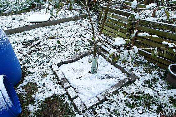 apflebaum-im-winter