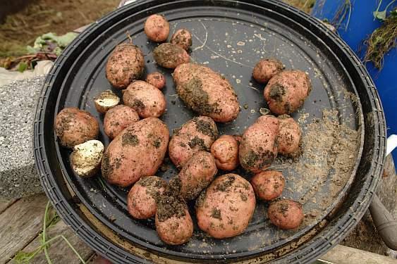 ein-gutes-kartoffeljahr