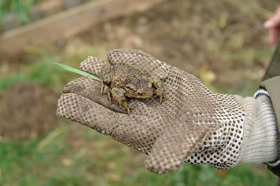 geretteter-frosch