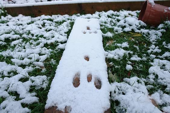 kaninchenspuren-im-schnee