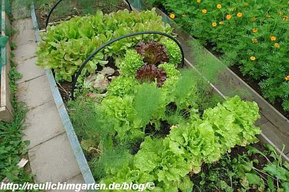 beet-voller-salat