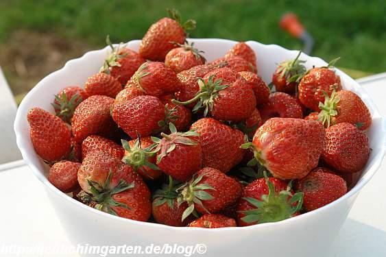 erdbeeren-in-schale