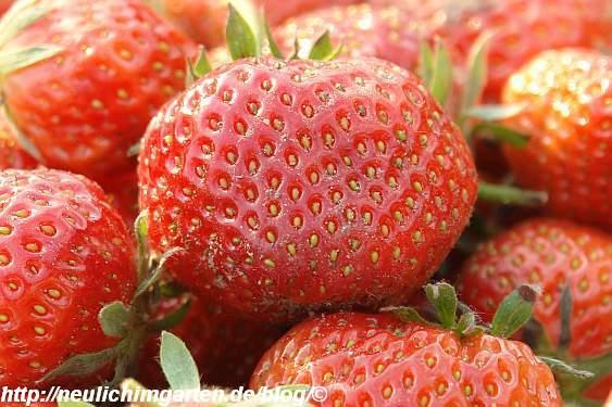 erdbeeren-nah