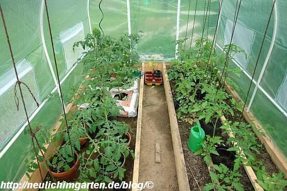 Man kann deutlich sehen, dass die Tomaten in den Saecken deutlich ...