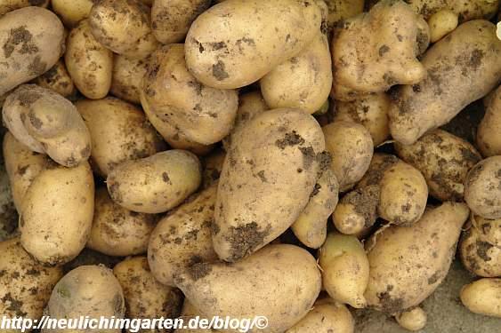 kartoffeln-nahaufnahme