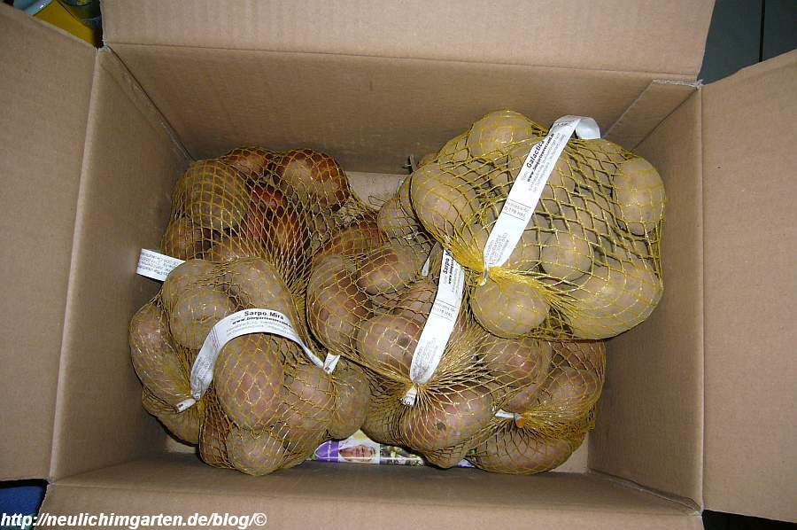 pflanzkartoffel-lieferung