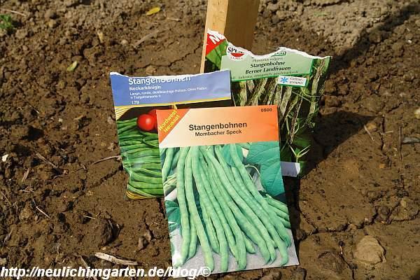 gruene-stangenbohnen-samentueten
