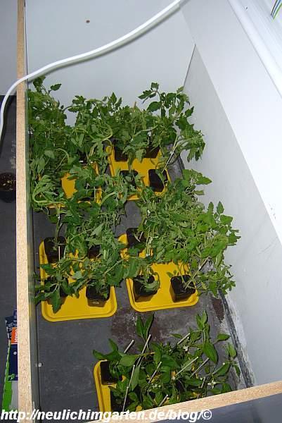 treml-alle-pflanzen