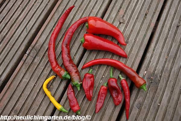sieben-verschiedene-paprika-und-chili