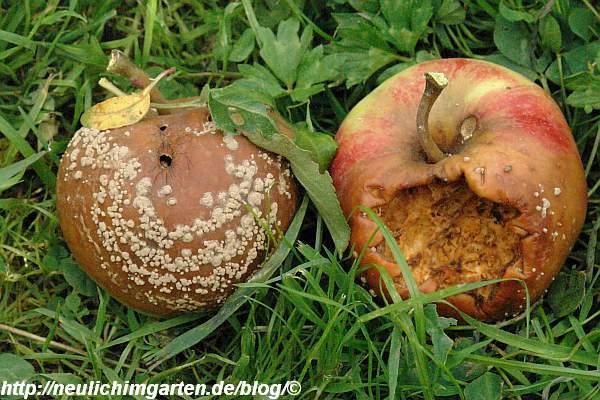 aepfel-im-gras
