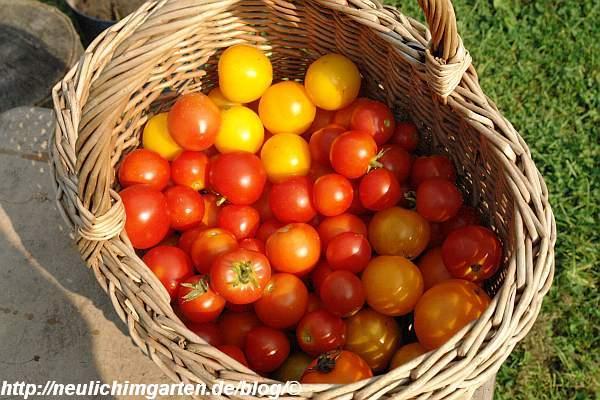 korb-voll-tomaten