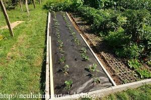 bepflanztes-erdbeerbeet