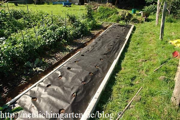 erdbeeren im hobbygarten pflanzen so machen wir s. Black Bedroom Furniture Sets. Home Design Ideas