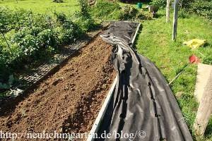 mulchfolie-auf-erdbeerbeet