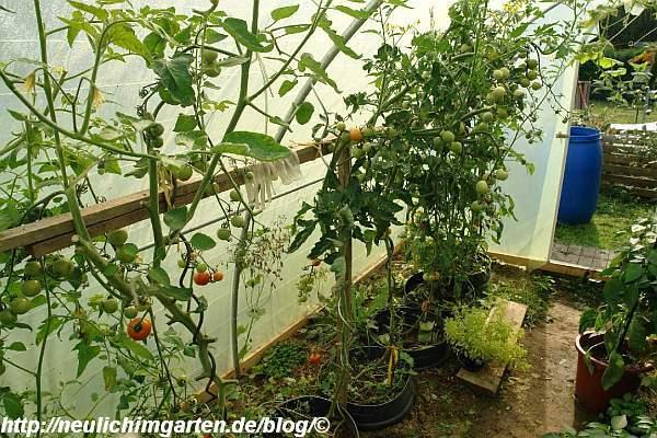 hilfsgestell-fuer-tomatenstangen