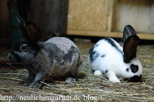 neue-kaninchen