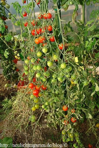 tomaten im hobbygarten oder welche sorte hat sich am besten geschlagen video. Black Bedroom Furniture Sets. Home Design Ideas