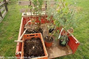 wildobst-pflanzen