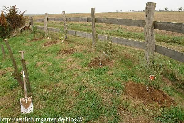 Klettergerüst Für Pflanzen : Wildobsthecke pflanzen oder herbstzeit ist pflanzzeit. video