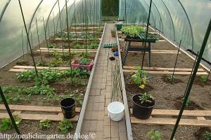 folientunnel-bepflanzt