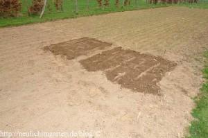 getreide-im-garten-anbauen