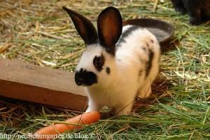 junges-kaninchen-beim-fressen