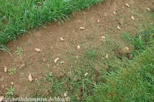 kartoffelanbau-unter-stroh