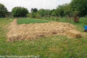 kartoffeln-unter-stroh-ein-anbauversuch