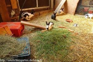 leben-im-kaninchenstall