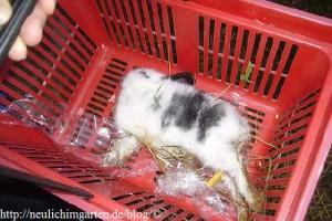 totes-kaninchen