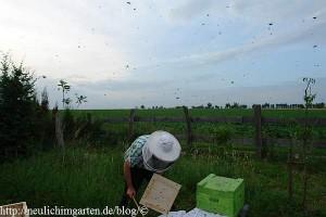 die-luft-voller-bienen