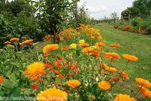 unterpflanzung-bei-obstbaeumen