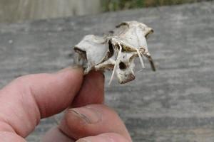 unbekannter Skelettfund