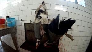 Enten schlachten