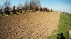Weizenfeld im Garten