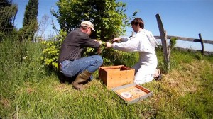 Zwei Fachleute bei den Bienen