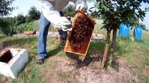 Bienen abschlagen und die Waben schnell bienensicher verstauen