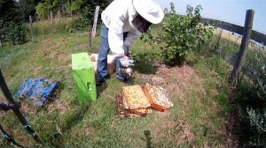 Drohnenbruetige Bienen aufloesen