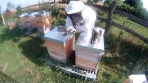 Bienen ich hoffe alles richtig gemacht zu haben