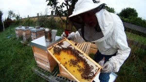 Honigraum halb gefuellt