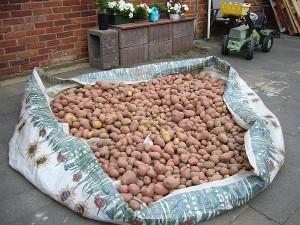 Kartoffeln trocknen
