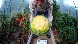 Melone ist reif wenn die Unterseite gelb ist