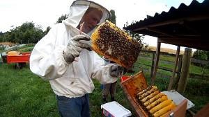 Brut im Honigraum Bienenkiste