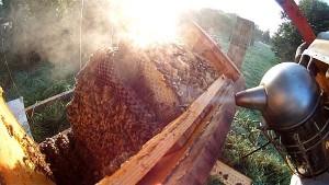 Honigraum Bienenkiste