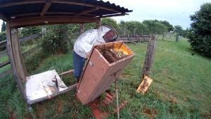 Mit der Bienenkiste imkern