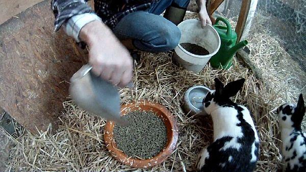 nippeltränke für kaninchen
