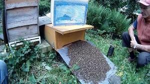 So kommen die Bienen in die Bienenkiste