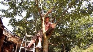im Kirschbaum klettern