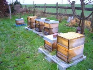 Bienen im Sturm