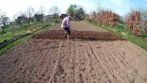 Kartoffeln im Garten richtig anbauen